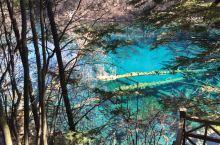 恋恋不舍从五花海离开,从公路对面栈道下行,这一段就是孔雀河道,据说秋季落叶在水面上,斑斑点点,像极了
