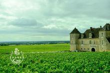 勃艮第地区的葡萄酒,产量不高,质量却很高,皇室专供的葡萄酒产自这里,多少人跟我们一样来到这里朝圣,4