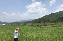 中国最美乡村,打卡婺源本地菜,发现美食就在身边接地气小餐馆。图一 篁岭风景区周边的稻田,图二 木桶米