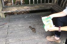 @三清山三宝     瓜子、棍子和水 1.瓜子是因为山上的松鼠特别多,剥瓜子非常厉害,一颗一颗的扔足