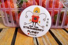 我在草莓星球