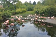 苏黎世动物园-奇妙动物世界之旅  说起老少皆宜的地方,就要数动物园啦!苏黎世动物园的门票也不是很贵,