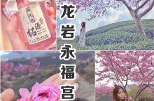 厦门驱车仅2小时 |直达福建秘境小京都,邂逅甜到发酥的樱花美景  常在日本电影里看到樱花,主人公走在