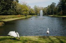 """米德尔顿庄园是美国最古老的园林之一,位于美国南卡罗来纳州查尔斯顿,也称作花园俱乐部,有""""美国最重要,"""