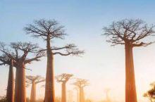 """免签国家探秘之——马达加斯加  马达加斯加电子签证申请系统正式上线啦!""""机票在手,说走就走""""的目的地"""