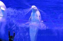 第一次打卡长隆海洋王国,真的是惊喜不断,各种可爱的动物随处可见,尤其是演出非常精彩,重点推荐白鲸,海