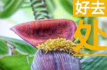 天津热带植物观光园,坐落在西青中北镇,目前是北方最大的室内热带植物园,环境如同天然氧吧,空气清新,拥