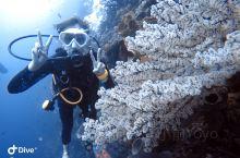 解锁一项新技能:OW初级潜水员 今年的目标之一考潜水证打上勾勾 能看到很多一般人看不到的美景 克服了