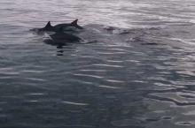 """毛里求斯追海豚的要诀:一是早,二是快。 """"早""""指的是早上很早就要出海,这与毛里求斯野生海豚的固定习性"""