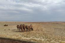 新疆自驾游第一天,天池→可可托海……