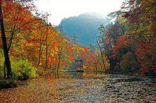 黎坪秋色,是众多摄影家创作的基地,每到秋天,黎坪漫山枫红桦黄,形成一幅迷人的秋色画卷。 放眼远眺,诱