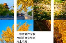 北京旅行 深秋正当时 故宫赏银杏完全攻略