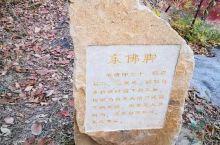 泰山北麓的玉泉寺,原名谷山寺,始建于北魏。这里峰谷相望,曲径通幽。工作人员说,寺里4棵银杏树,最高的