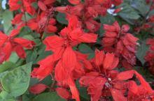 四方山植物园的菊花展真的非常的美丽,希望大家有时间的时候都去看一看。各式各样的菊花非常鲜艳,陶冶情操
