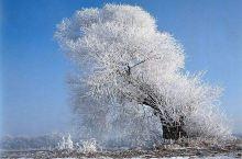 这雪,这风,冬天终于还是来了,春天还会很遥远么?