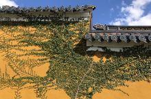 黄墙绿植很漂亮!