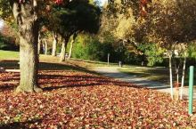 洛杉矶公园的深秋!美丽、惊艳!