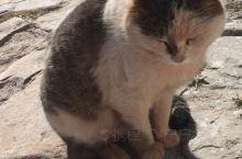布达拉宫里的猫咪们