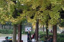 双流中心花园,自然原声态之声。。。 双流中心公园  ,湿地公园,很大,挑战徒步哟