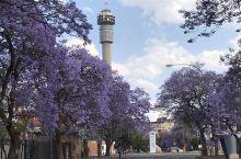 南非著名的景点之一紫薇花大道