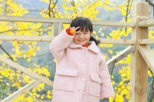 想了一百个关于秋天的文案 都不及这一刻的阳光与微笑  新县·杨高山古银杏群景区