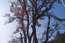 红色旅拍,千年古树