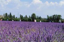 解忧公主薰衣草庄园————位于伊犁霍城,创建于2008年,由薰衣草文化博物馆、薰衣草种植及加工三部分