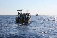 出海观鲸 前几天在平原和山区的旅程结束了,现在开始沿海游。 米瑞莎观鲸是第一站,曾经有机会在加拿大的