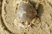 阳光, 沙滩,奇石,诱人流口水的热带水果,还有可爱的海上小生灵。令我们心旷神贻,乐不思蜀。这是我们一