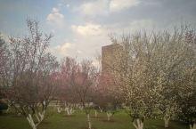 著名高校的校园景观