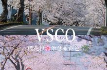 VSCO调色教程🌸粉色治愈系樱花调色📷 🌸又到赏樱花的季节啦,先把这组粉色治愈系樱花调色学起来~ 📍