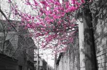 没有一个冬天不会过去,没有一个春天不会到来!走在街头巷弄,乡村田野,发现春天的缤纷。春天如期而至,疫