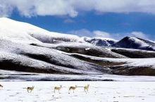 西藏记忆,