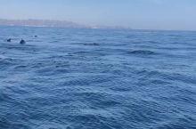 无边无际的大海,海豚在无拘无束玩耍,好羡慕