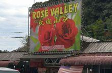 金马仑玫瑰山谷