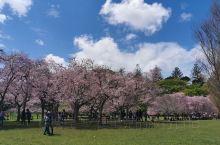 奥克兰市, 一树山公园,原本属于私人的领地, John Campbell, 在大概一百年前无偿赠与了
