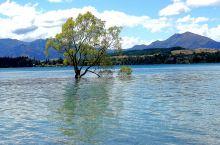 带你游新西兰~打卡Wanaka瓦纳卡镇  湖畔小镇瓦纳卡位于新西兰南岛瓦纳卡湖区,距离皇后镇67.2