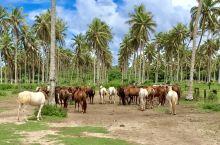 在瓦努瓦图的旷野,策骑穿过绿油油的田野,民居,奔向清澈无污的海滩,再步向水中,下水,翻身上马,再骑回