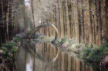 林中有水 水中有鱼 林内有鸟 河流回环 水杉林立 美丽画卷