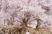 这个冷门的绝美赏花地:不用签证、没有游客!  这个美丽的地方在新疆,新疆的风景一年四季都很美,但是杏
