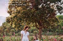 深圳拍照地|Spring~走进印象派的油画里  绝对是宝藏地点!深圳大鹏美丽乡村  拍出来就像普罗旺
