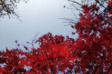 常熟虞山红叶是极美的,没有高大上的相机,用普通手机拍的效果也不差!每年深秋,结伴赏叶的人从各方走来,