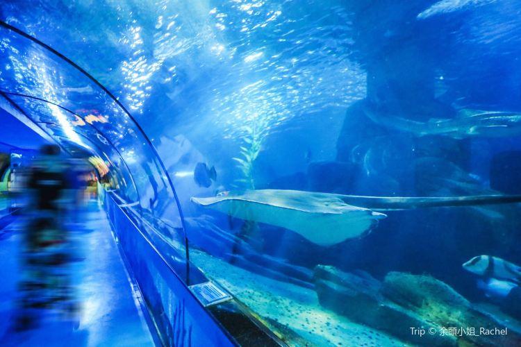 Polar Ocean World2