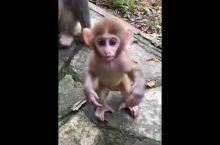 张家界森林公园的猴宝~可爱吧^ 猴宝要跟我玩,猴妈不让啊~