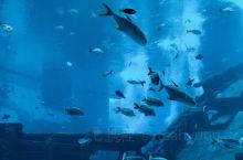 sea海洋馆真心不大,一般游玩2小时左右就ok了,可以白天去海洋馆,下午去环球,两个地方都在圣淘沙岛