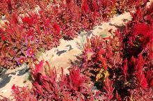 阿拉善右旗,地处巴丹吉林和腾格里两大沙漠交汇地带,是全国沙漠面积最多、土地沙化最严重的地区之一。在阿