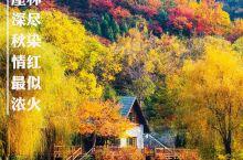 赏秋最撩人目的地推荐!济南最美红叶季,千万别辜负  秋季最美赏红枫,观红叶目的地,许你一个最浪漫的赏