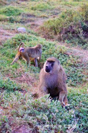 Amboseli,Recommendations