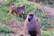 """搓板路尽头的狂野,肯尼亚必打卡国家公园""""安博塞利""""  生杀予夺物竞天择,食物链的残酷与自然界的平衡"""