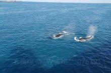 美丽的鲸鱼